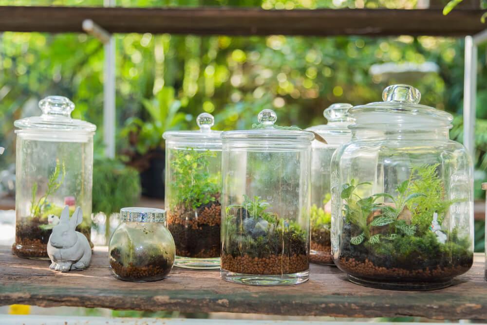 Planten terraria