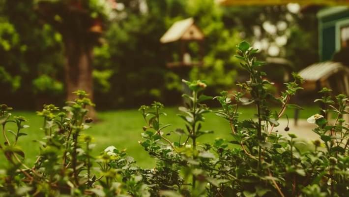 Tuin natuurlijke uitstraling