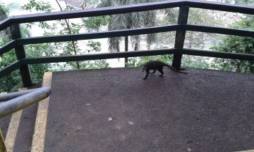 I managed not to get bitten or robbed by the few coatis I saw