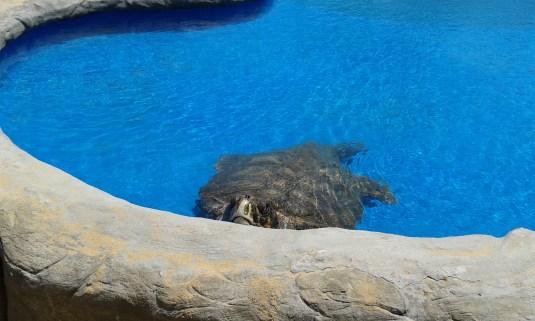 loads of sea-turtles