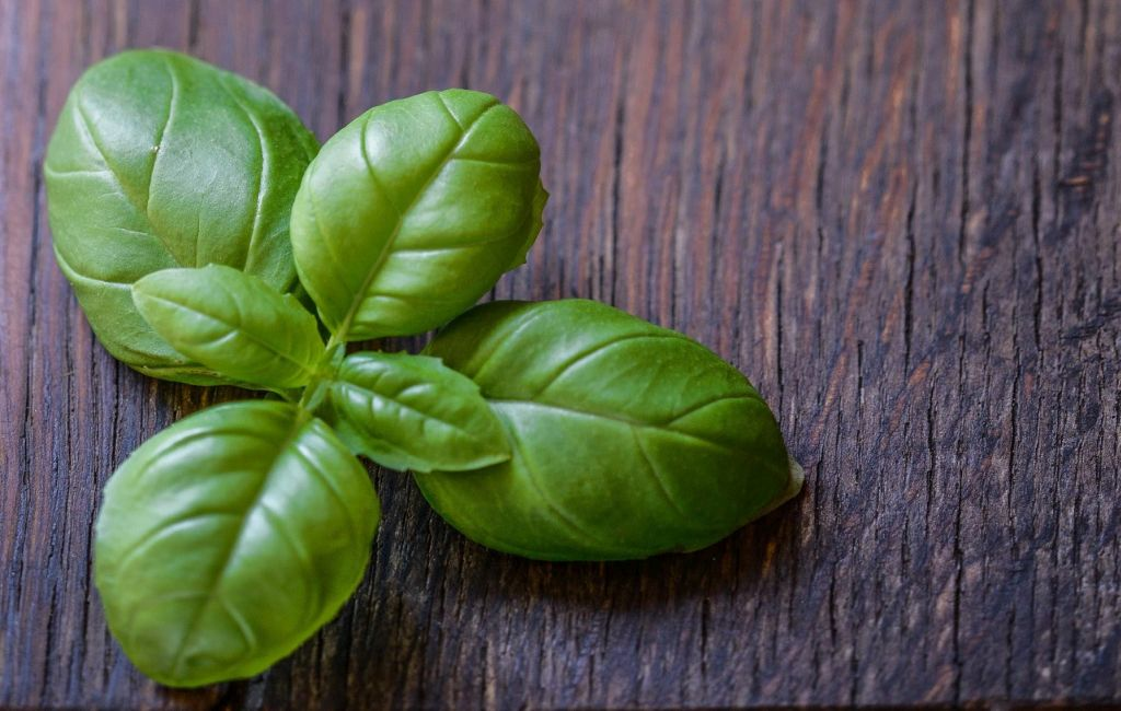 Picture of Basil Leaves Photo Credit: https://badwitch.es/green-witch-diaries-basil/