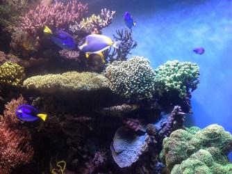 coral-reef-474052_1920