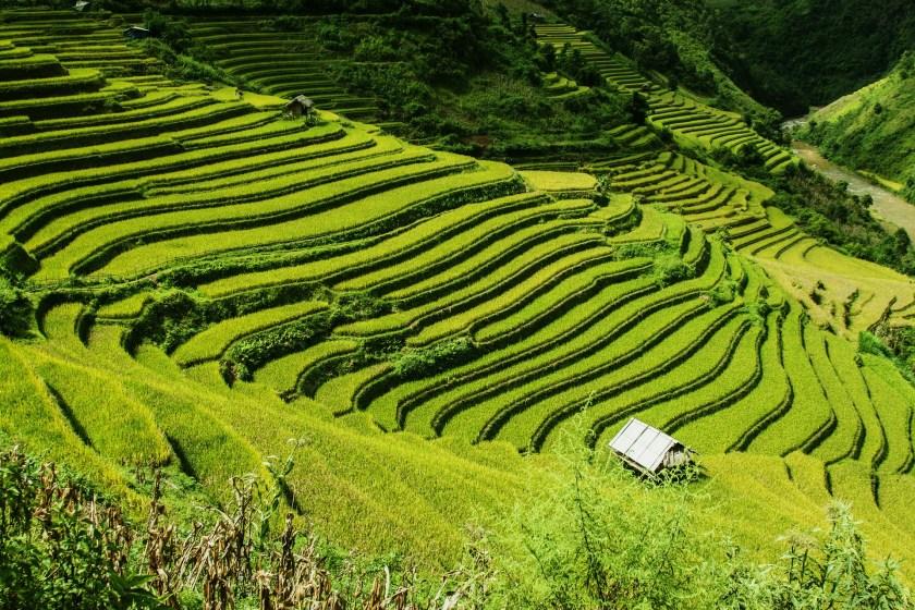 rice-terraces-276017_1920