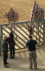 Baggie feeding the Giraffes