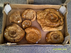 A box of fossils