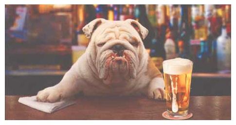 bulldog (5)