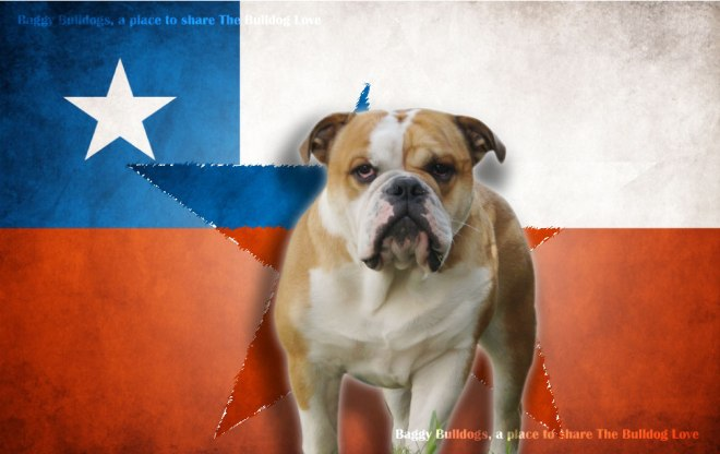 Chile with my own boy Lewis. I have both nationalities, Chile and Dutch, so two country's to root for ;)