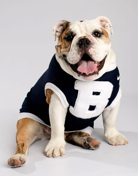 bulldog butler University 2