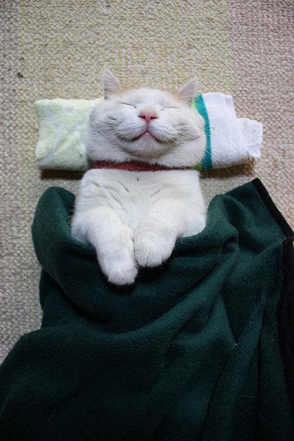 Happy Cat Shironeko Under Cover