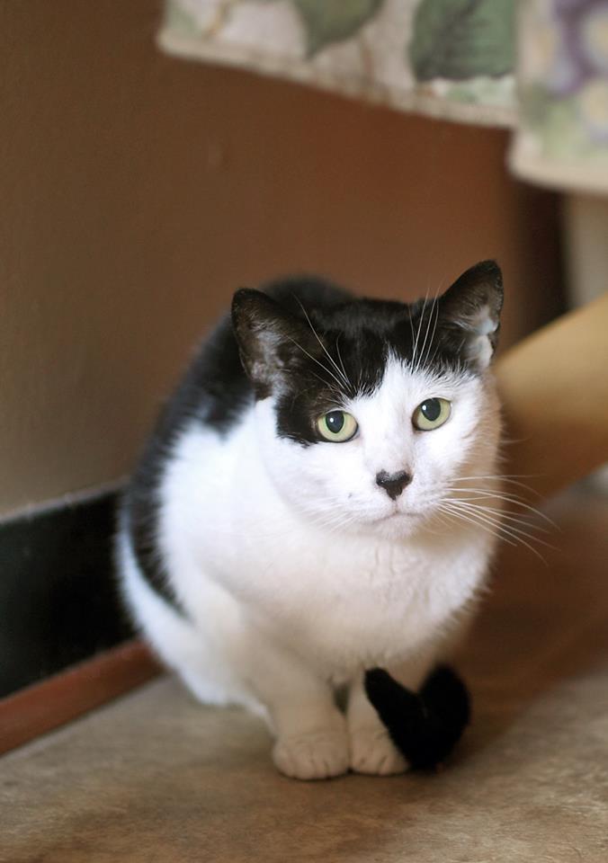 Special needs cat Sassie