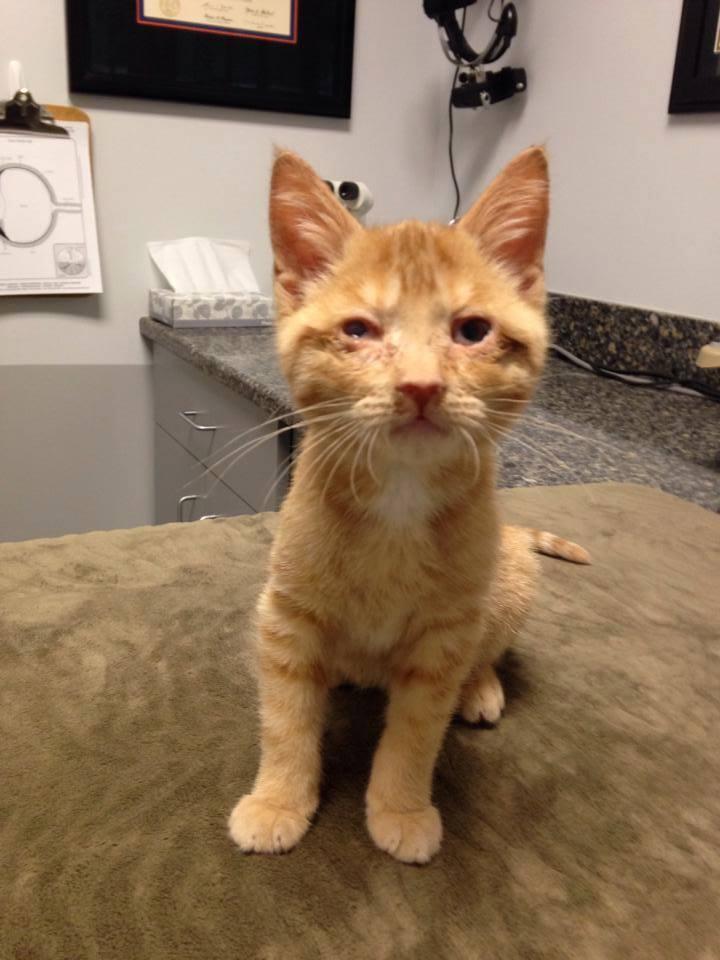 Special Needs Cat Rajah At His Checkup