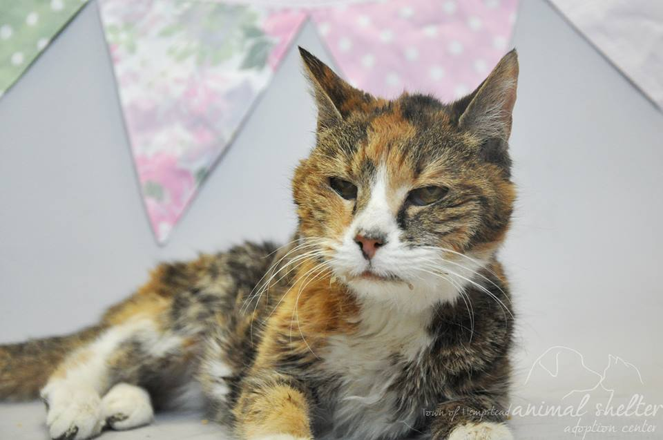 Vala Saved by Cat Rescue Group Golden Paws