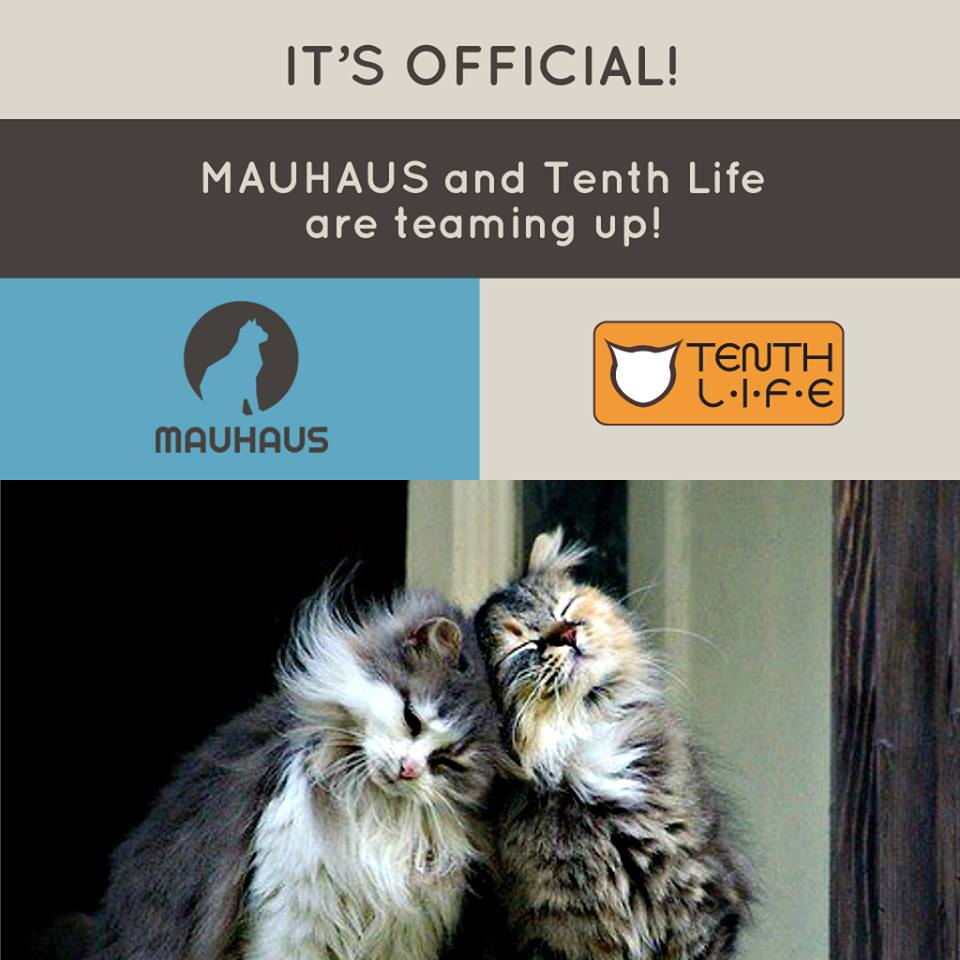 Mauhaus Cat Cafe and Tenth Life are Teaming Up