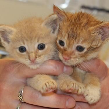 Tiny Felines Dakota and Theo