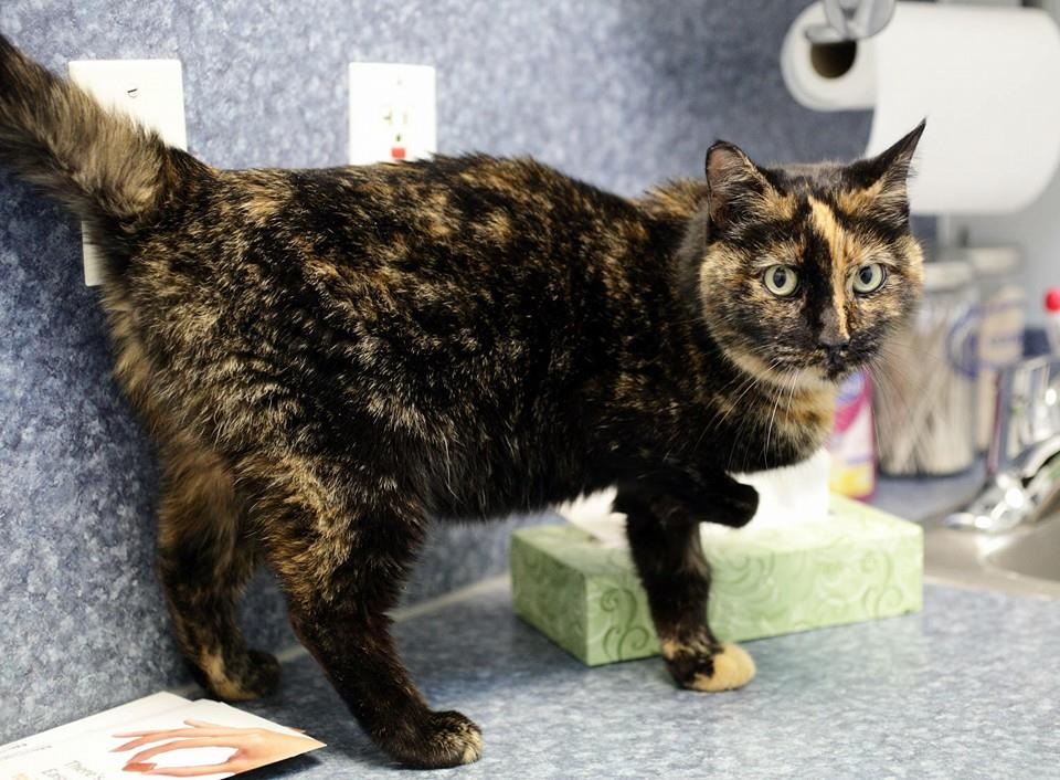 Special Needs Cat Cara Is Being Cared for by Lucky's HART