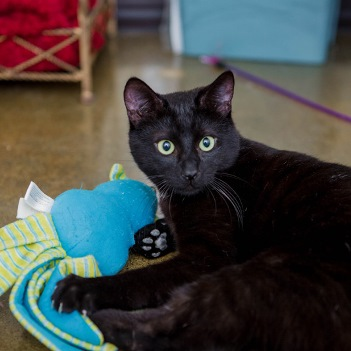 Special Needs Cat Scooter Found a Home