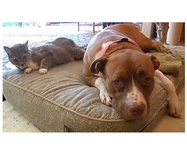 Jack Saved Kitty from Coyotes