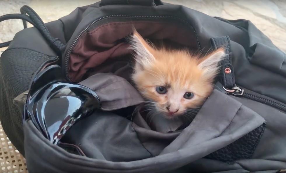 A Grateful Tiny Feline