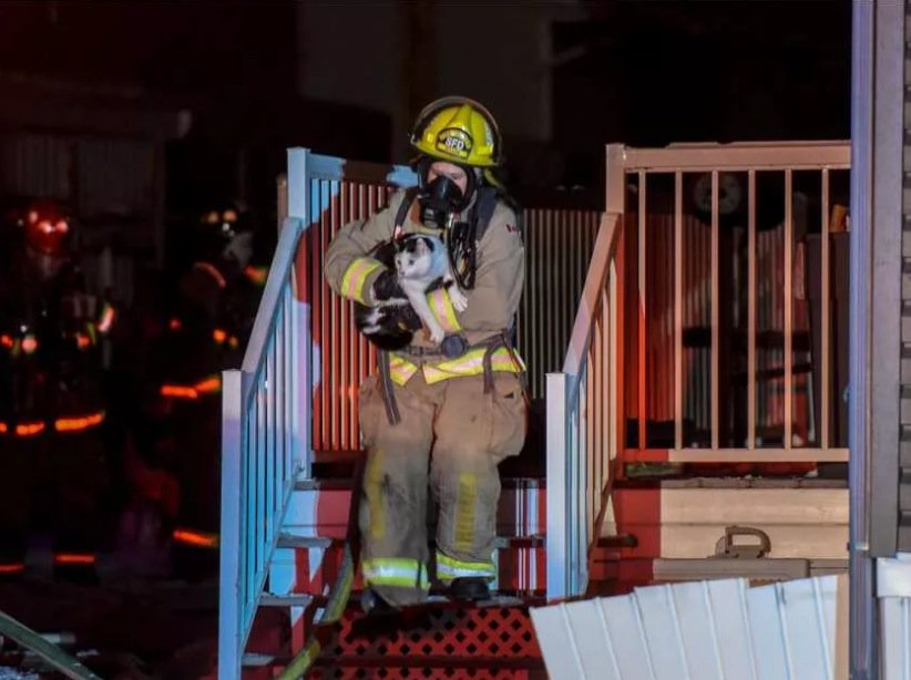 Feline Saved from Fire After Waking Up Humans