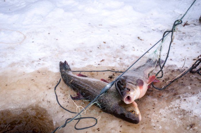 BAG NET Des Fischers Handwerk wird auf Eis gelegt, Ausstellung, Video- und Fotoausstellung, B7, 2020, Sassnitz, Rügen, Deutschland, Kuratorin Marlen Melzow