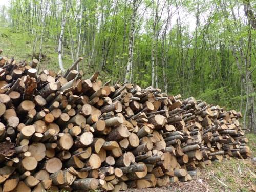 Sisto's wood
