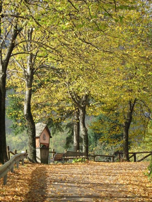 autumn in Vergemoli
