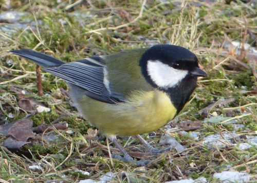 Helsinki bird