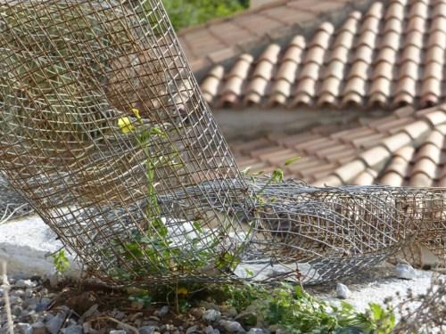 Chicken wire chap