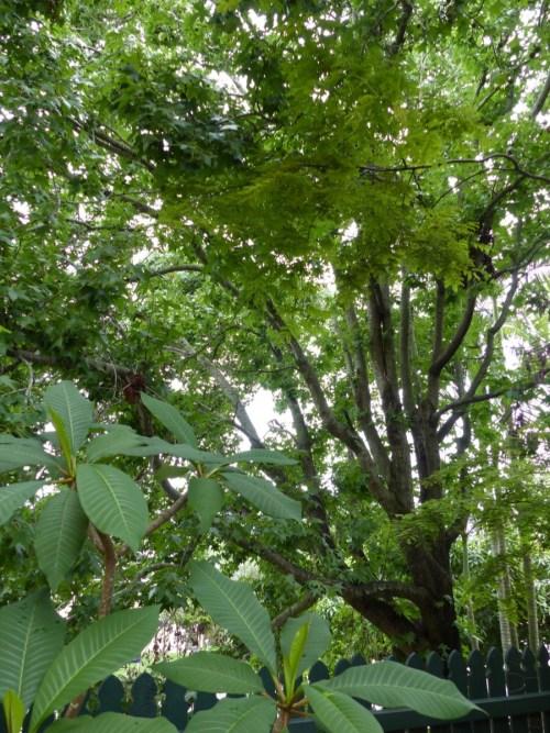 Highgate Hill tree