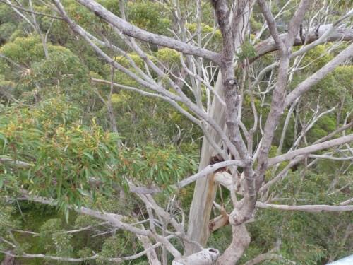 Tree Top Walk