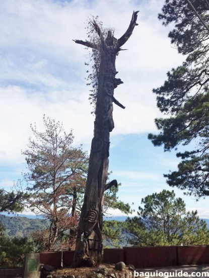 oldest pine tree of baguio city