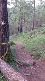 yellow trail camp john hay baguio (18)