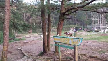 yellow trail camp john hay baguio starting point
