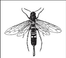 aplikasikan cara membasmi kumbang bubuk kayu dengan permethrin.