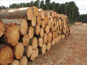 kayu log harus ditreatment dengan obat pengawet kayu agar kualitasnya tidak turun.