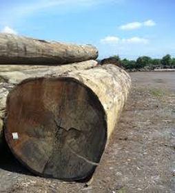 kayu surabaya