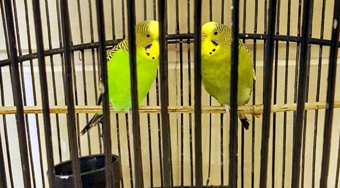 Los pájaros mayordomos de Shenzhen