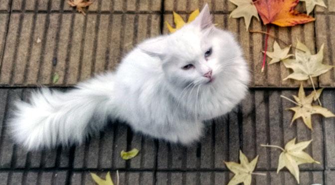 Fotografías de gatos en Buenos Aires