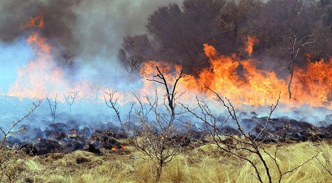 Incendios, plegarias y recorte en ciencia y técnica