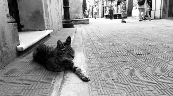 Gatos en el cementerio de la Recoleta