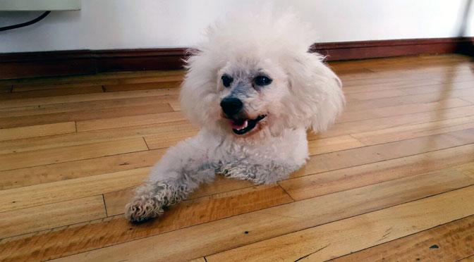Honey, nuestro perro, cumple 16 años