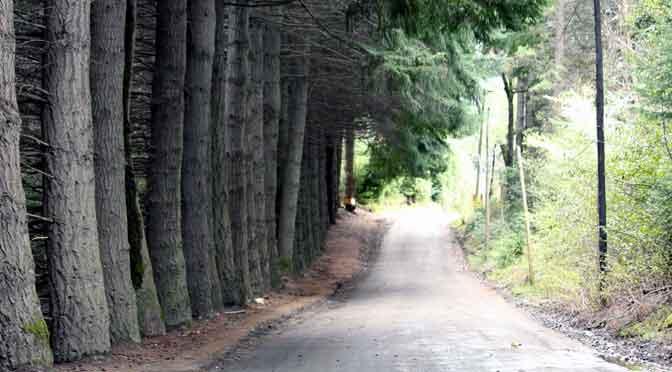 Las calles de la península Manzano, Neuquén, Patagonia, Argentina