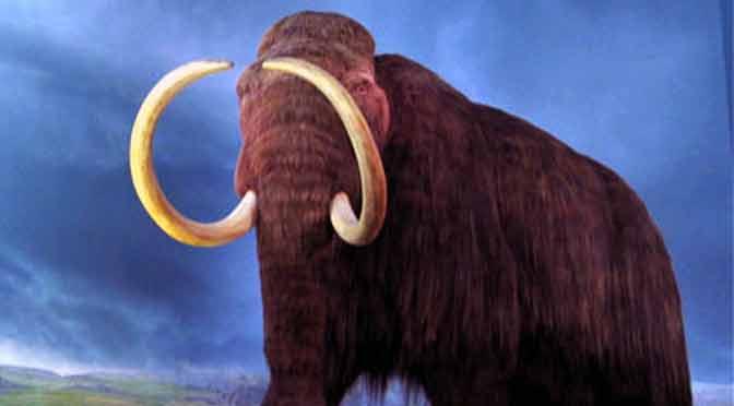 Científicos logran reactivar células de un mamut de hace 28.000 años