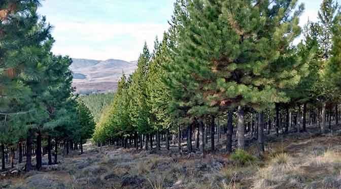 ¿Sirve plantar un árbol para salvar el planeta?