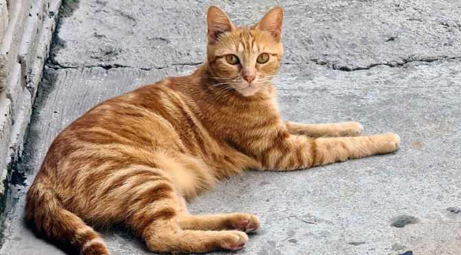 Pruebas de cámaras de Samsung Galaxy S20 Ultra con un gato en Núñez