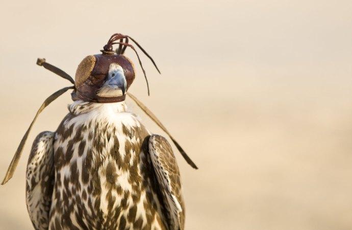 Al Areen Wildlife Reserve