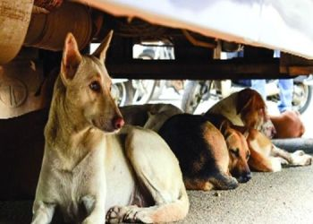 68-year-old-man-arrested-for-raped-30-dogs-from-mumbai