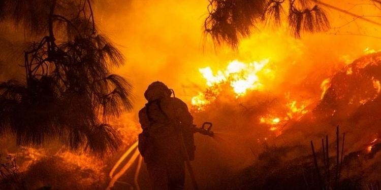 three-forest-workers-die-forest-fire-gondia