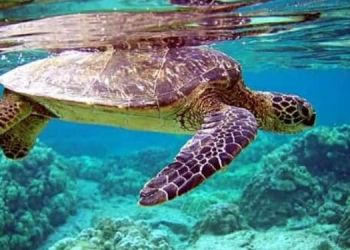 turtle-dies-after-falling-from-20th-floor-case-filed