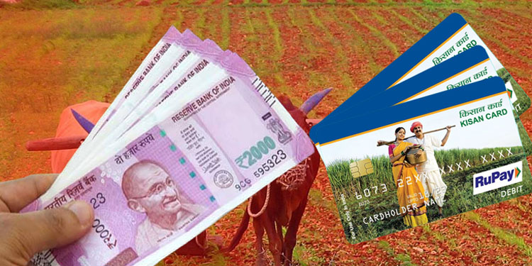 top15 kisan credit card how to become member in pradhan mantri kisan samman nidhi yojana how to apply for kcc know every detail here